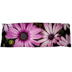 Beautiful Colourful African Daisies  Body Pillow Cases (dakimakura)  by OZMedia