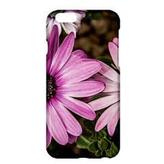 Beautiful Colourful African Daisies  Apple Iphone 6 Plus/6s Plus Hardshell Case by OZMedia
