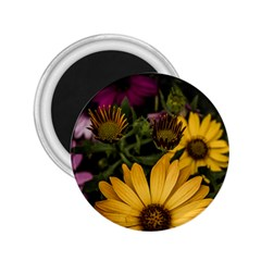 Beautiful Colourful African Daisies  2 25  Magnets by OZMedia