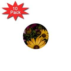 Beautiful Colourful African Daisies  1  Mini Buttons (10 Pack)  by OZMedia