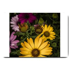 Beautiful Colourful African Daisies  Large Doormat  by OZMedia
