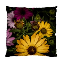 Beautiful Colourful African Daisies  Standard Cushion Case (one Side)  by OZMedia