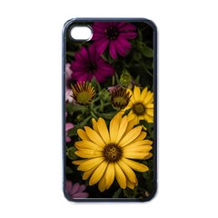 Beautiful Colourful African Daisies  Apple Iphone 4 Case (black) by OZMedia