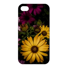 Beautiful Colourful African Daisies  Apple Iphone 4/4s Hardshell Case by OZMedia