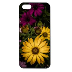 Beautiful Colourful African Daisies  Apple Iphone 5 Seamless Case (black) by OZMedia