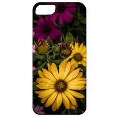 Beautiful Colourful African Daisies  Apple Iphone 5 Classic Hardshell Case by OZMedia