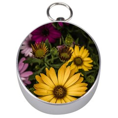 Beautiful Colourful African Daisies  Silver Compasses by OZMedia