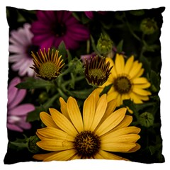 Beautiful Colourful African Daisies  Large Flano Cushion Cases (two Sides)  by OZMedia