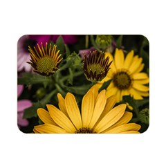 Beautiful Colourful African Daisies  Double Sided Flano Blanket (mini)  by OZMedia