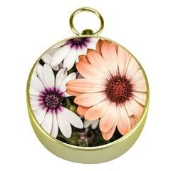 Beautiful Colourful African Daisies Gold Compasses by OZMedia