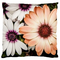 Beautiful Colourful African Daisies Standard Flano Cushion Cases (two Sides)  by OZMedia