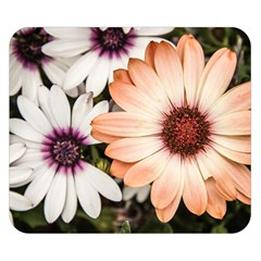 Beautiful Colourful African Daisies Double Sided Flano Blanket (small)  by OZMedia