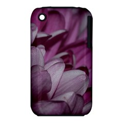Purple! Apple Iphone 3g/3gs Hardshell Case (pc+silicone) by timelessartoncanvas