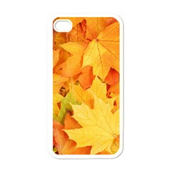 Yellow Maple Leaves Apple Iphone 4 Case (white) by trendistuff