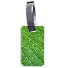 Green Leaf Drops Luggage Tags (two Sides) by trendistuff