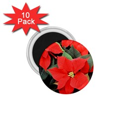 POINSETTIA 1.75  Magnets (10 pack)  by trendistuff