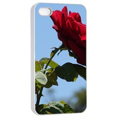 Red Rose 2 Apple Iphone 4/4s Seamless Case (white) by trendistuff