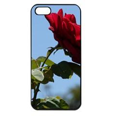 Red Rose 2 Apple Iphone 5 Seamless Case (black) by trendistuff