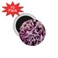 PURPLE LILACS 1.75  Magnets (10 pack)  by trendistuff