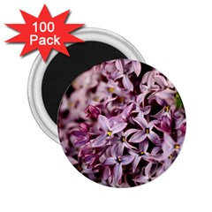Purple Lilacs 2 25  Magnets (100 Pack)  by trendistuff