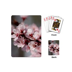 Plum Blossoms Playing Cards (mini)  by trendistuff