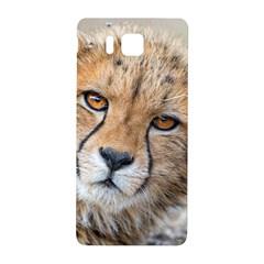 Leopard Laying Down Samsung Galaxy Alpha Hardshell Back Case by trendistuff