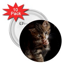Talk To The Paw 2 25  Buttons (10 Pack)  by trendistuff