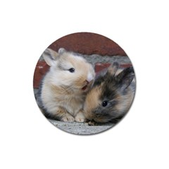 SMALL BABY RABBITS Magnet 3  (Round) by trendistuff