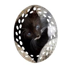 Pretty Blue Eyed Kitty Ornament (oval Filigree)  by trendistuff