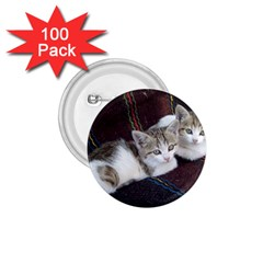 Kitty Twins 1 75  Buttons (100 Pack)  by trendistuff