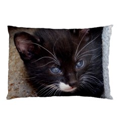 Kitty In A Corner Pillow Cases by trendistuff