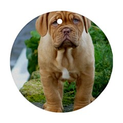 Cute Wrinkly Puppy Ornament (round)  by trendistuff