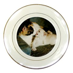 Calico Cat And White Kitty Porcelain Plates by trendistuff