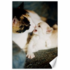Calico Cat And White Kitty Canvas 24  X 36  by trendistuff