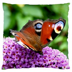 Peacock Butterfly Large Cushion Cases (two Sides)  by trendistuff