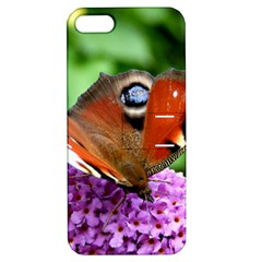 Peacock Butterfly Apple Iphone 5 Hardshell Case With Stand by trendistuff