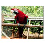 Red MaCaw Parrot Puzzle - Jigsaw Puzzle (Rectangular)