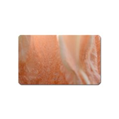Floating Subdued Peach Magnet (name Card) by timelessartoncanvas