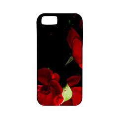 Roses 1 Apple Iphone 5 Classic Hardshell Case (pc+silicone) by timelessartoncanvas