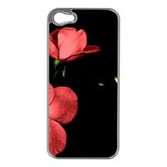 Mauve Roses 2 Apple Iphone 5 Case (silver) by timelessartoncanvas