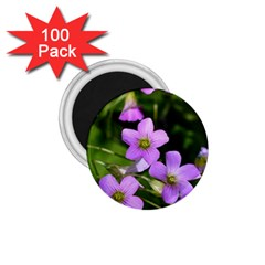 Little Purple Flowers 1 75  Magnets (100 Pack)  by timelessartoncanvas