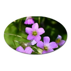 Little Purple Flowers Oval Magnet by timelessartoncanvas