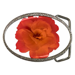 Red Rose Photo Belt Buckles by dflcprints