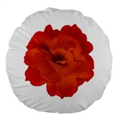 Red Rose Photo Large 18  Premium Round Cushions by dflcprints