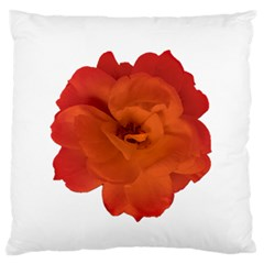 Red Rose Photo Large Flano Cushion Case (one Side) by dflcprints
