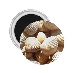 Tropical Exotic Sea Shells 2.25  Magnets by yoursparklingshop