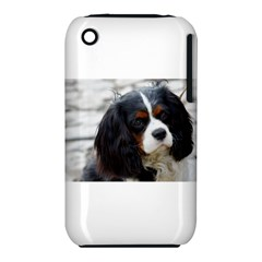 Cavalier King Charles Spaniel 2 Apple iPhone 3G/3GS Hardshell Case (PC+Silicone) by TailWags