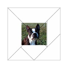 Boston Terrier Acrylic Tangram Puzzle (6  x 6 ) by TailWags
