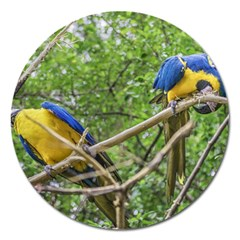 South American Couple Of Parrots Magnet 5  (Round) by dflcprints