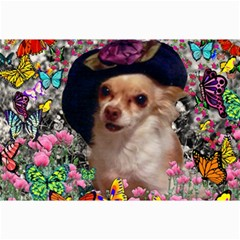 Chi Chi In Butterflies, Chihuahua Dog In Cute Hat Canvas 12  X 18   by DianeClancy